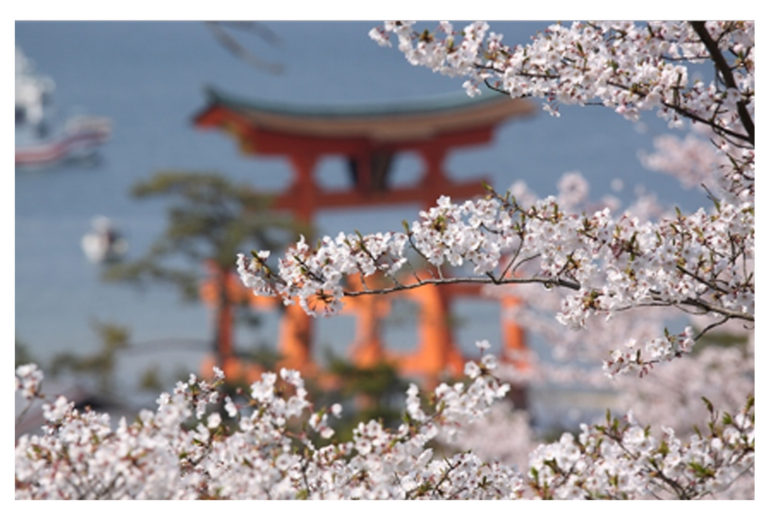 אביב ביפן | מיאג'ימה | טיול מאורגן ליפן עם 'יפן חוויה אחרת' | צילום: אליהו טוב