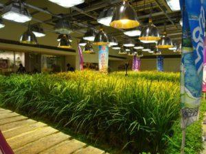 מאמר יפן - אביב ביפן בדגש חקלאות