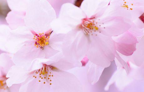 אוסף תודות – טיולים מאורגנים ליפן –  טיפול בתקופת הקורונה