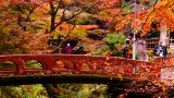 Autumn Colors & Bridge - Dedi Flint