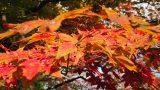 טיול מאורגן ליפן | יפן חוויה אחרת | צבעי סתיו יפני | צילום עופר דנון | Explore Japan