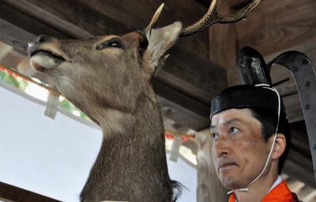 3.1.2020 | טקס יהודי במקדש יפני?! טהרה, טקסים והקרבת חיות בדתות יפן | פרופ' ניסים אוטמזגין