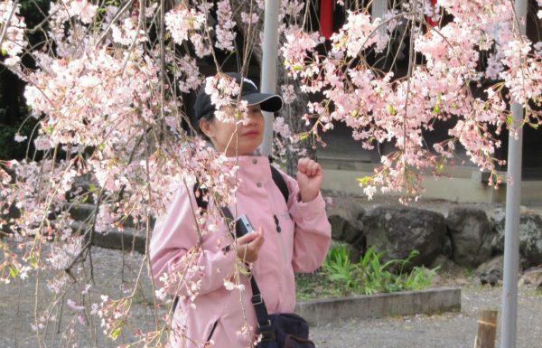 להריח את יפן – תפיסות יופי ואסתטיקה