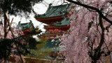 קיוטו - מקדש היאן | צילום: אילה דנון