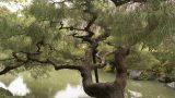 Spring15-Remus-Kyoto1 (4)